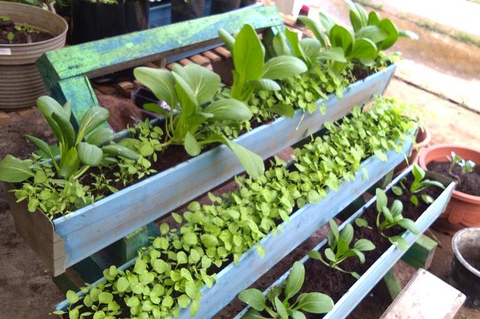 7 Ide Bisnis Pertanian Rumahan Modal Kecil, Untung Besar!
