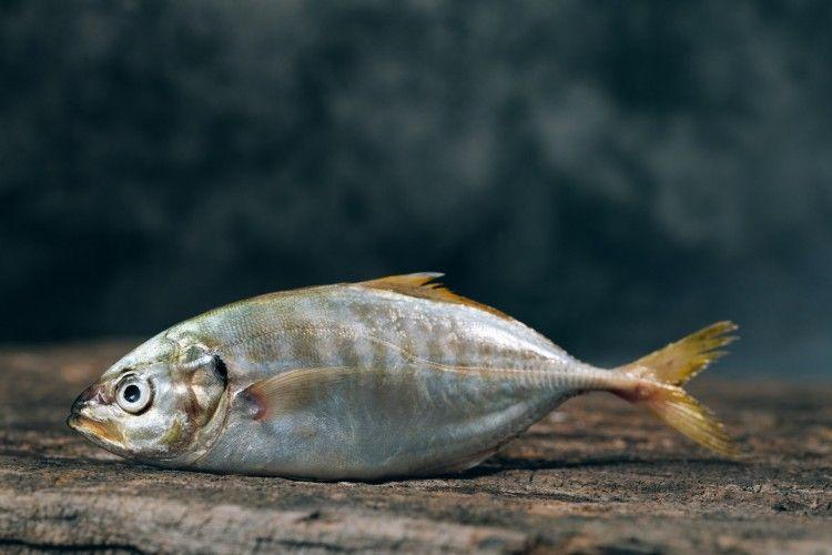 Viral Ikan Bisa Berenang Meski Isi Perut Telah Dibersihkan