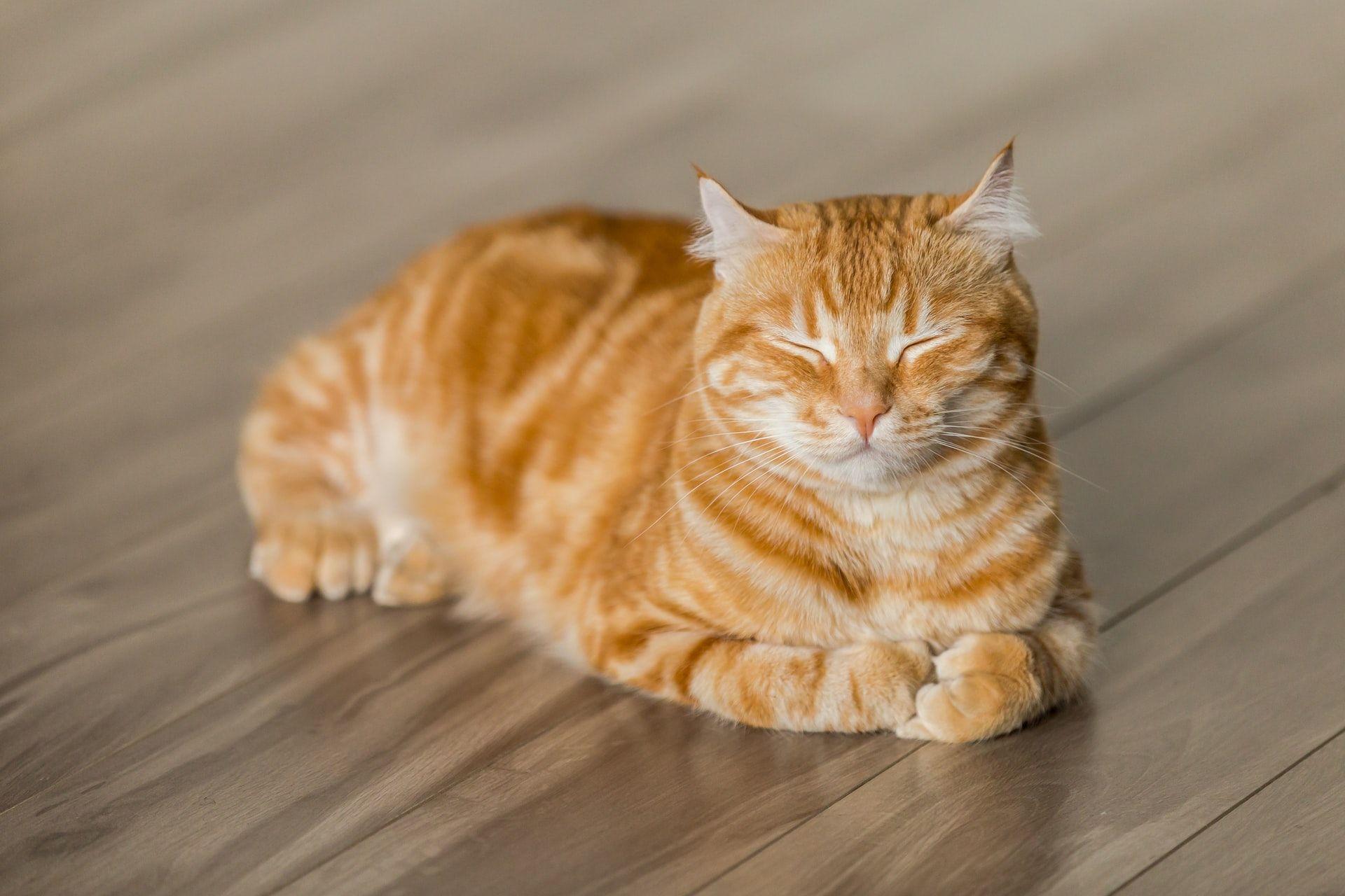 40 Inspirasi Nama Kucing Betina dan Jantan yang Menggemaskan