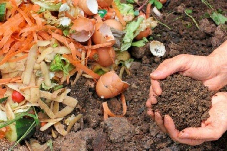 Cara Membuat Pupuk Kompos Alami dari Sampah dan Kotoran