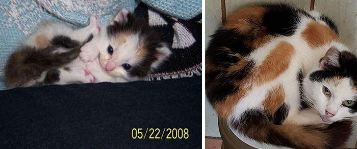 11 Foto Pertumbuhan Kucing Dulu & Sekarang Ini Bikin Gemas Maksimal