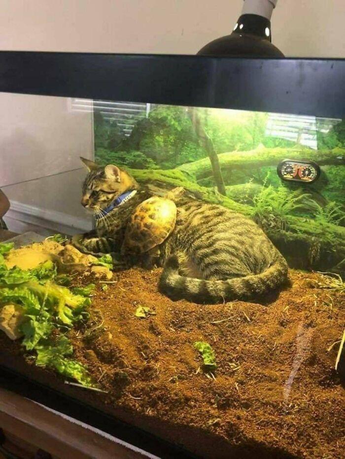 13 Kelakuan Kucing di Tempat yang Tak Seharusnya Ini Bikin Ngakak Pol!