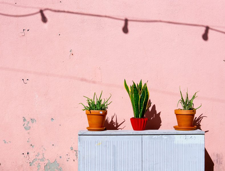 Tanaman Hias Makin Hits, Simak 5 Langkah & Tips untuk Mulai Bisnisnya