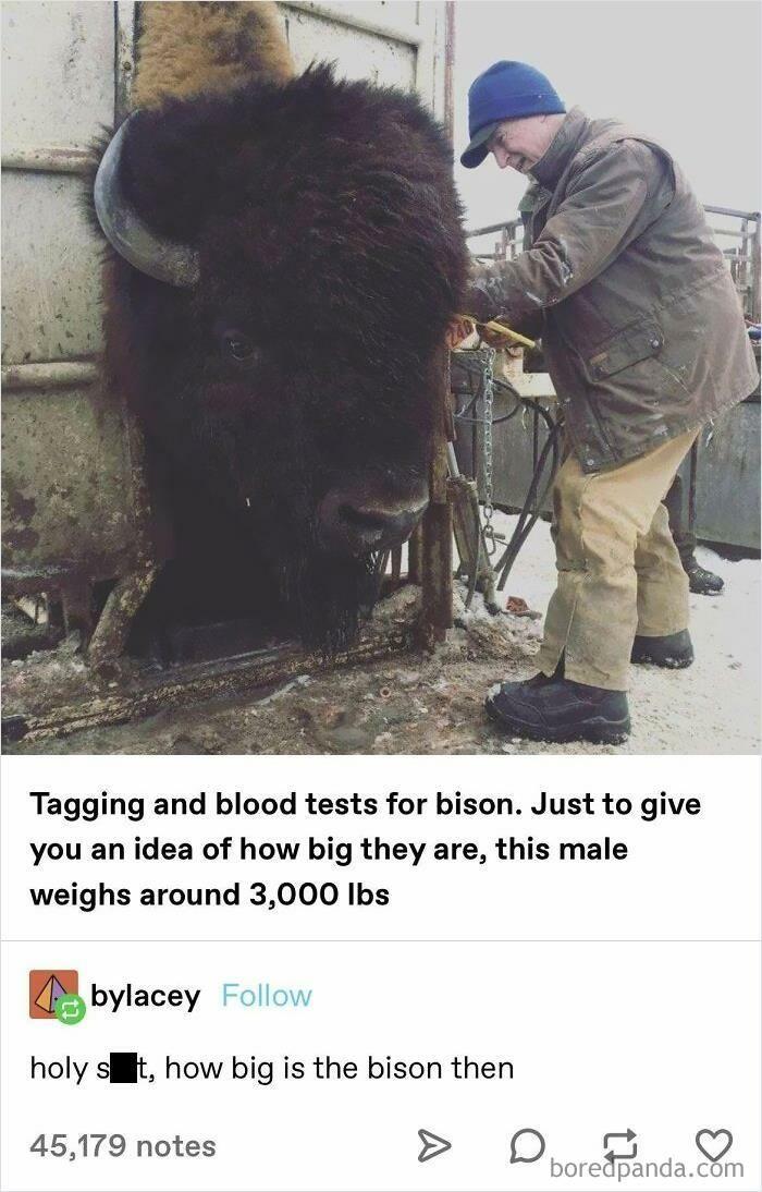 13 Foto Ini Buktikan Binatang Bisa Tumbuh Lebih Besar dari Perkiraan