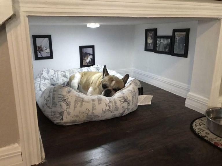 Sangat Dimanja, Kucing dan Anjing Ini Dibuatkan Rumah Pribadi