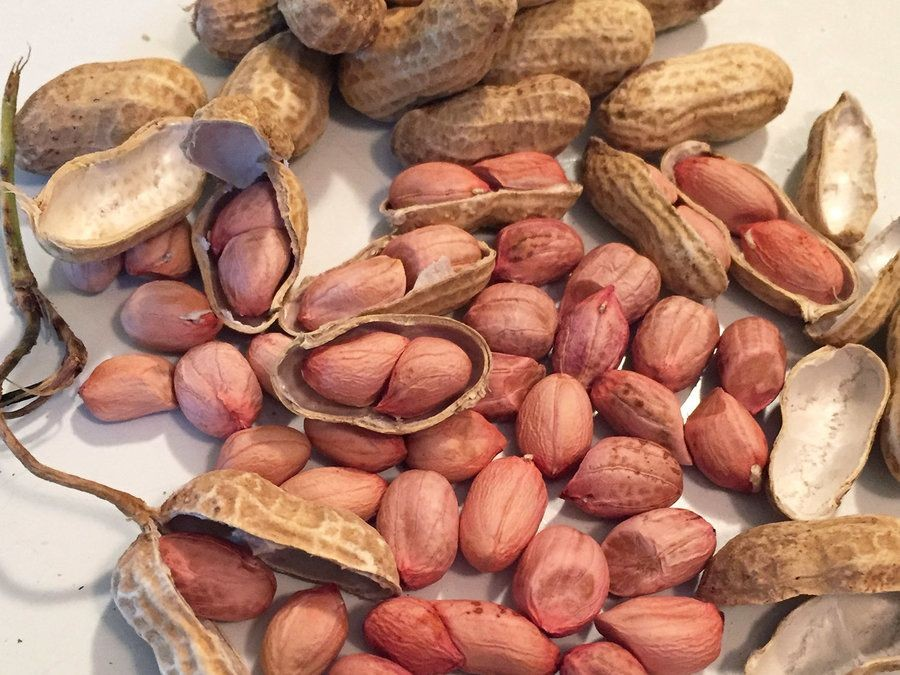 Resep Kacang Bawang Empuk untuk Camilan Lebaran, Begini Caranya!