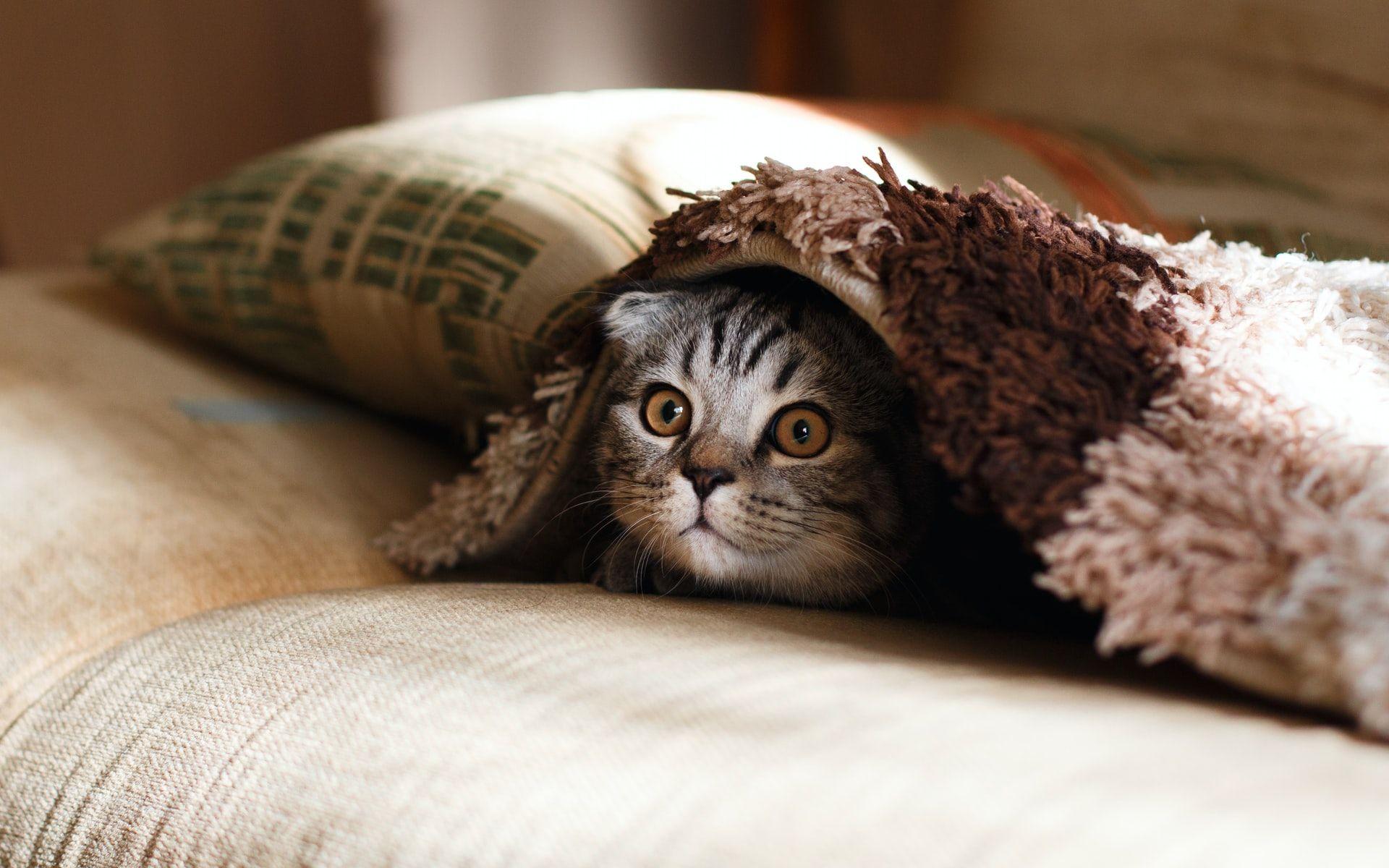 8 Cara Mudah Menghilangkan Kutu Kucing, Bahan-Bahannya Mudah Dicari