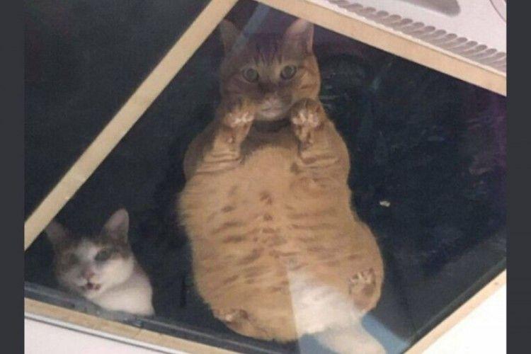Satu Kucing Kurang, Ini 11 Alasan Kamu Perlu Dua Kucing di Rumah