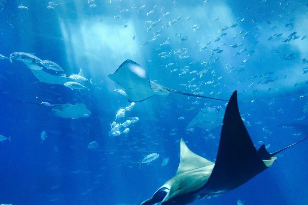 13 Fakta Menakjubkan Tentang Laut yang Tidak Kamu Sangka