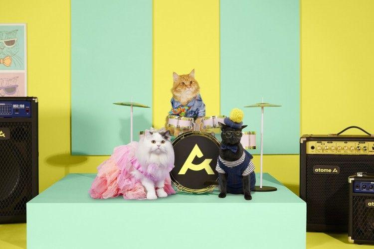 Atome Kittens, Band Kucing Pertama yang Akan Temani Kamu Belanja