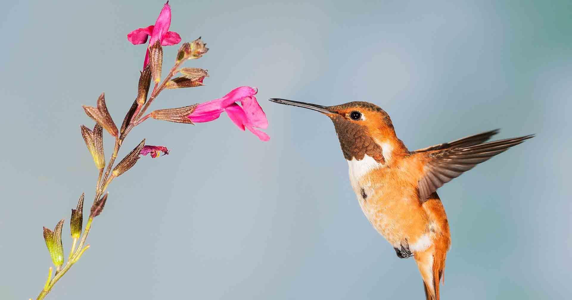 7 Burung Peliharaan yang Bisa Membawa Keberuntungan