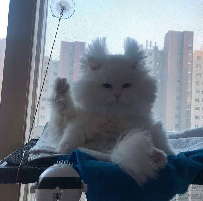 Nggak Cuma Kamu yang Lelah Hadapi Pandemi, 11 Kucing ini Juga Lho!