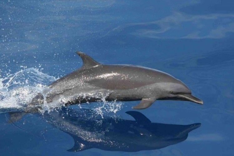 7 Alasan Kamu Perlu Berhenti Menonton Sirkus Lumba-lumba