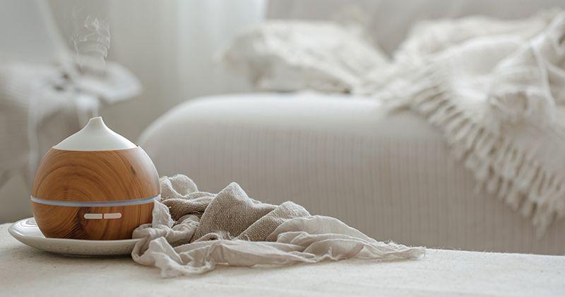 Mudah dan Efektif! Ini 7 Tips Mengatasi Bau Hewan Peliharaan di Rumah