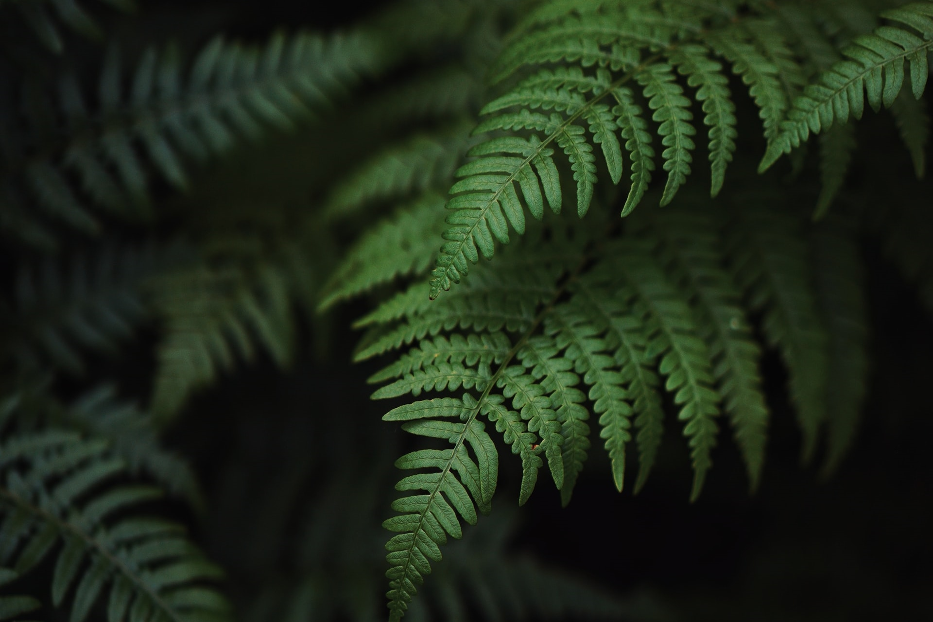 10 Tanaman Hias yang Bisa Tumbuh Tanpa Tanah, Bikin Estetik!