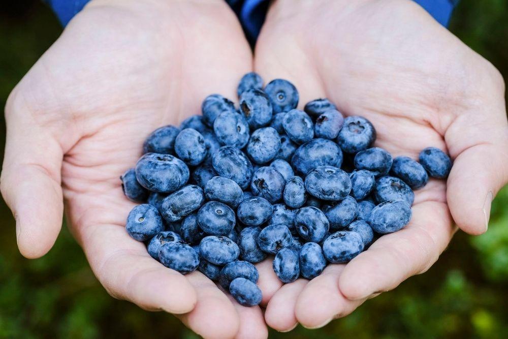 7 Manfaat Blueberry untuk Kecantikan yang Wajib Diketahui