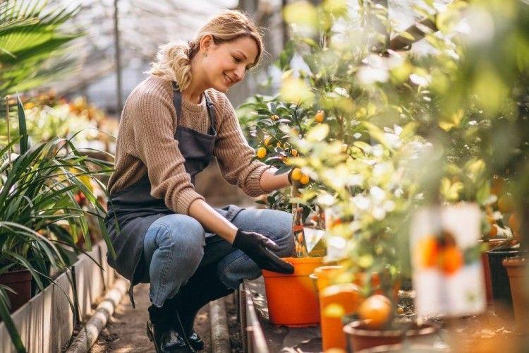 10 Tips Membuat Taman di Rumah Bagi Pemula