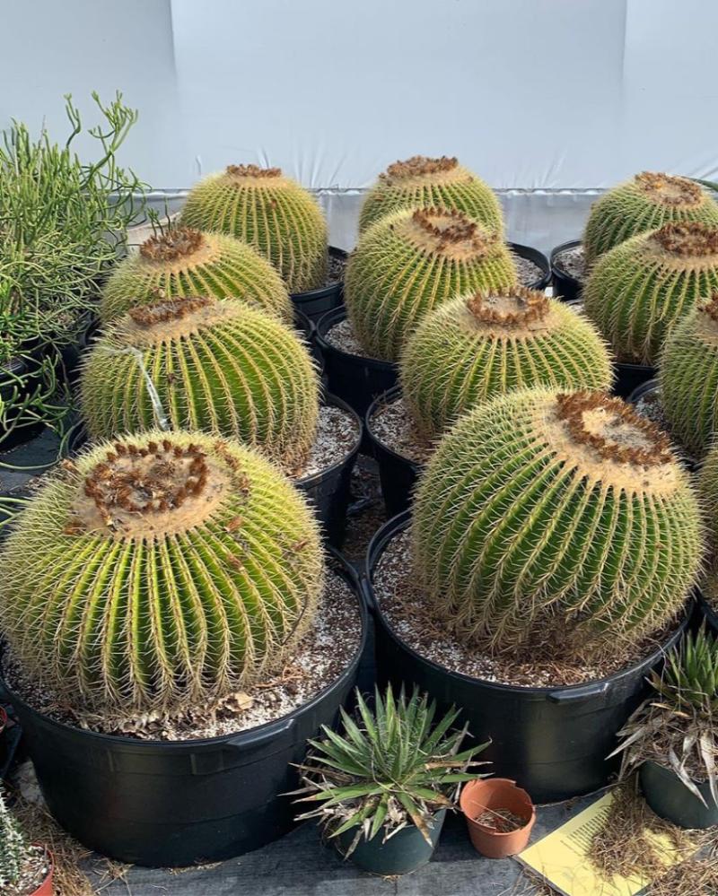 Jangan Salah Sangka, 5 Jenis Kaktus Ini Bisa Kamu Makan, Lho!