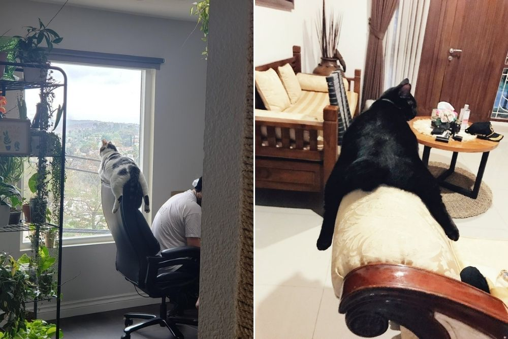 13 Kelakuan Kucing Dijamin Bikin Ngakak Sampai Nangis, Pas Buat Meme!