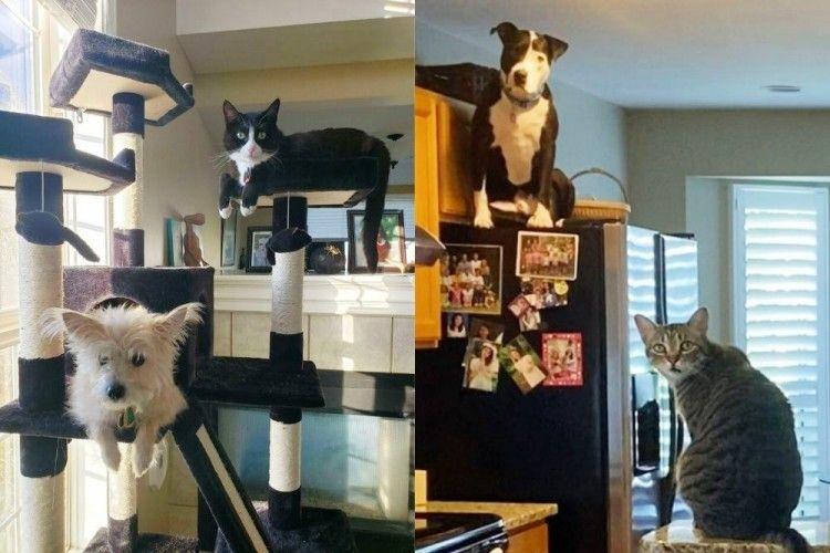 13 Foto Kelakuan Anjing yang Malah Mirip Kucing, Sukses Bikin Ngakak!