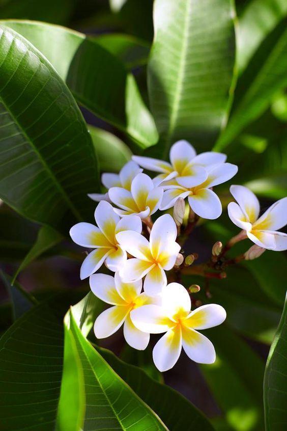 10 Tanaman Hias Cantik yang Cocok di Daerah Tropis