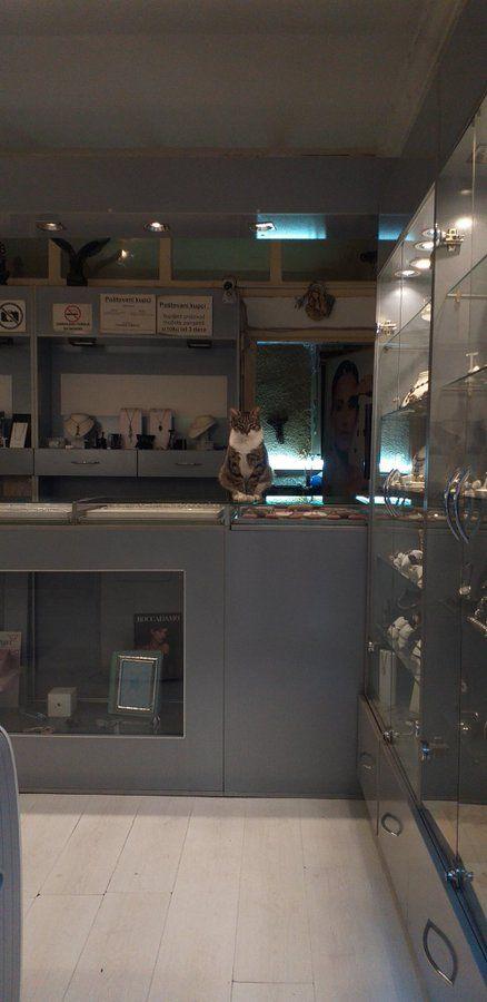 12 Foto Ini Menjadi Bukti Patung Kucing Maneki Neko Bisa Hidup!