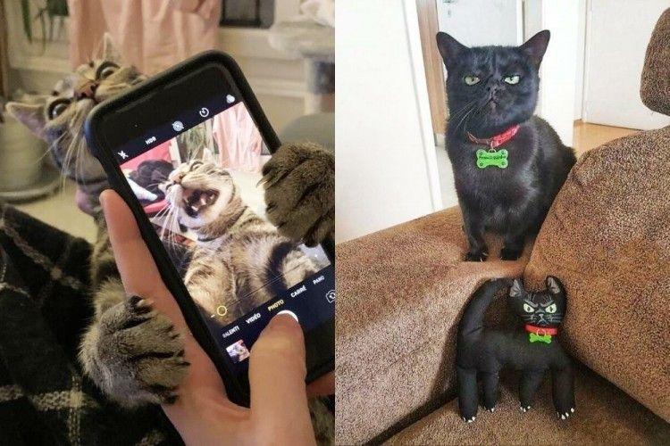 12 Foto Terbaru, Tingkah Kucing yang Bikin Ngakak Abis!