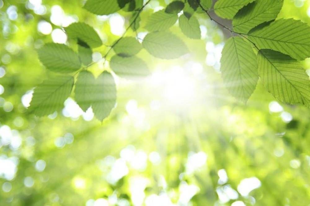 7 Tips Menanam dan Merawat Tanaman Rosemary agar Tetap Sehat