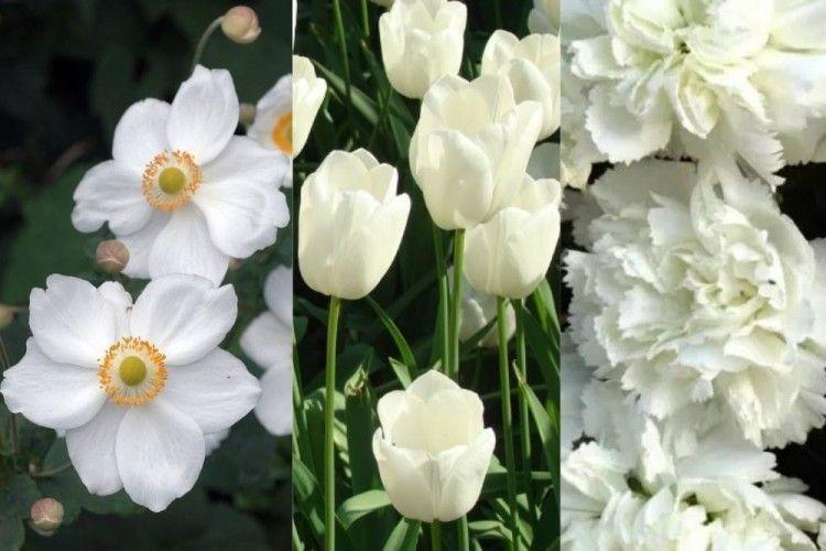 Rekomendasi 7 Bunga Kelopak Putih, untuk Percantik Rumah Kamu