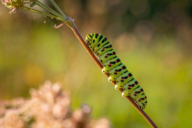 Bikin Tumbuhan Rusak, Ini 6 Cara Membasmi Ulat pada Tanaman