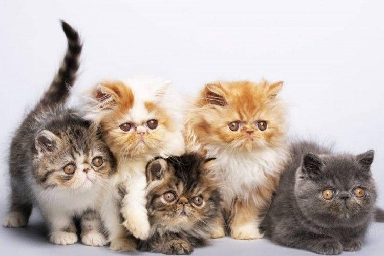 7 Cara Merawat Kucing Angora, Buat Kamu Pencinta Kucing