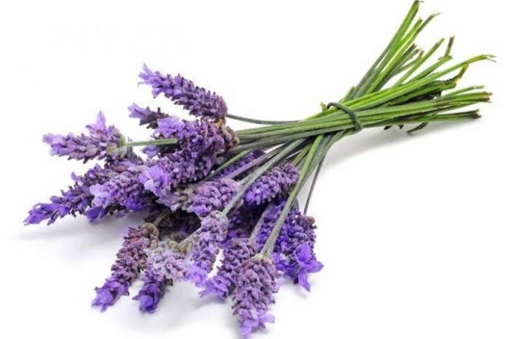 9 Cara Merawat Lavender di Rumah agar Tumbuh Subur