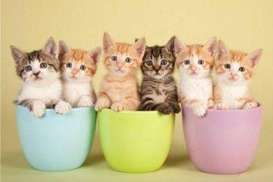 Inilah 7 Cara Mencegah Kucing Buang Kotoran Halaman Rumah